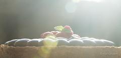 raspberry & chocolate pie (alangolfi) Tags: food argentina pie photography cuisine buenosaires sweet chocolate comida eat chef raspberry torta dulce alangoldfarb foodstylist raspberrychocolatepie puntoletra valeriaerlich
