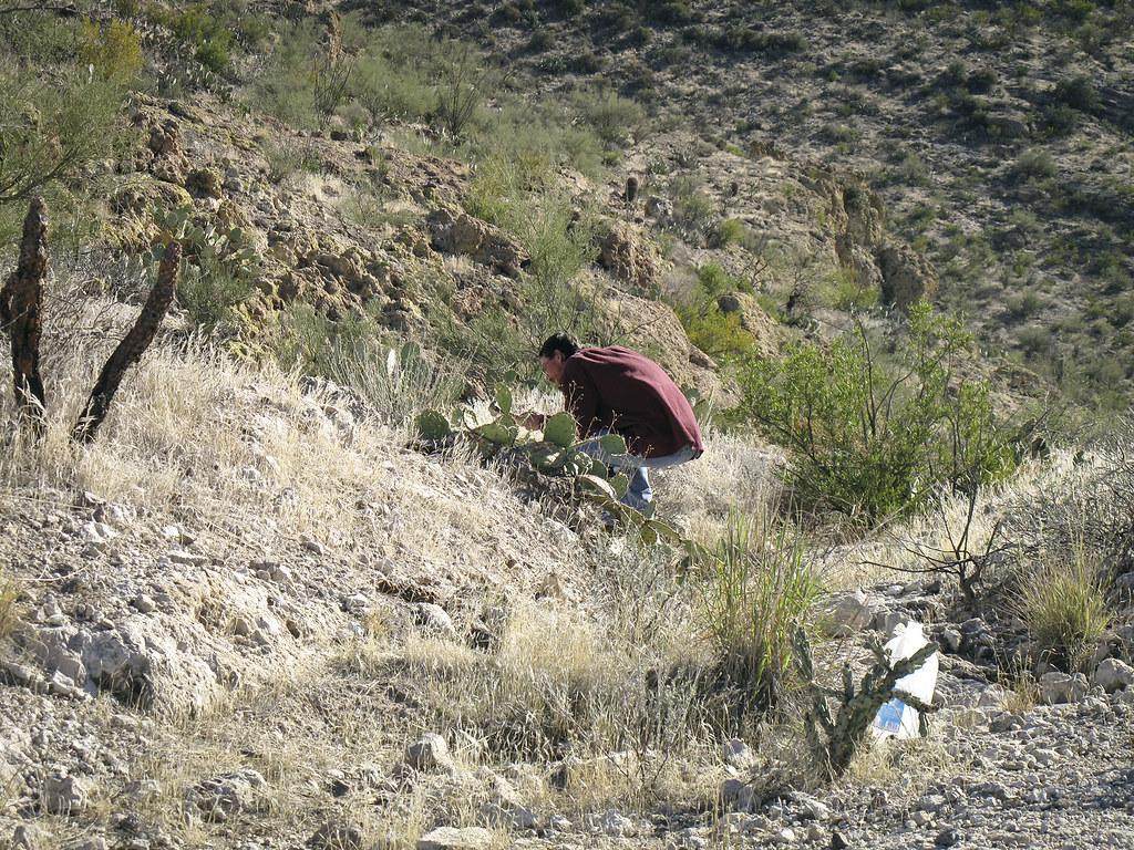 The World's newest photos of arizona and rockhounding