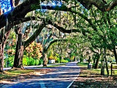 ~The Oaks along Mandarin Road~ (Barbara Wilford Art and Photography) Tags: road camera trees sun art fall beautiful digital photomanipulation wonderful photography daylight colorful bright mandarin colored glowing oaks lightgreen 100cameras blissful iphoneography