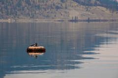 Tire Buoy 1 (LongInt57) Tags: blue orange brown lake canada black reflection water reflections grey bc okanagan gray lakes floating tire tires valley kelowna float buoys buoy