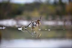 acqua, due, oh! (_esse_) Tags: reflection water river mirror branch dof fiume drawings double acqua ramo disegni specchio riflesso doppio duedidue
