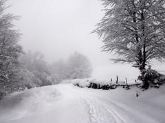 Winter (elosoenpersona) Tags: winter snow spain camino path nieve nevada asturias invierno elosoenpersona
