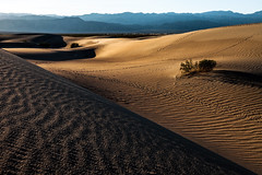 Eight hours for what? (rowjimmy76) Tags: county texture nature canon landscape outdoors is sand unitedstates hiking 5d geography usm geology southerncalifornia sanddune ef mojavedesert greatbasin markii deathvalleynationalpark inyo f4l 24105mm mesquiteflat