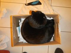 Ecology box (Ottmar H.) Tags: cat chat gato katze macska  kater  tomcat