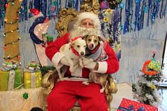 IMG_0129 (PMC Fresno) Tags: santa pet photos center medical spa pmc