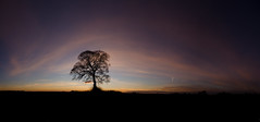 Tree Pan 2 (DanGrange94) Tags: winter sunset panorama sun colour tree silhouette clouds nikon december view dusk wide sigma panoramic 1020mm 2012 d7000