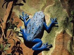 Tree frog (Tartantastic) Tags: frog blue