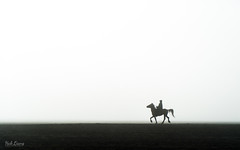 Strut (hak87) Tags: indonesia east java bromo mount silhouette strut horse whispering sand sea
