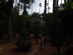 DSCN2624 (dbohaty) Tags: jardin majorelle morocco almaghrib