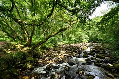 The River Plym at Shaugh Bridge, Dartmoor (Baz Richardson) Tags: devon dartmoor nationaltrust goodameavyestate riverplym rapids rivers woods