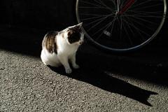 neko-neko1485 (kuro-gin) Tags: cat cats animal japan snap street straycat  sigma dp2