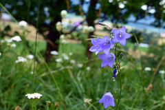 View (Michael Eickelmann) Tags: view aussicht bokeh dof flowers blumen plants pflanzen nature natur colors farben contrasts kontraste panasonic lumix fz 200 summer sommer feelings emotions gefhle emotionen