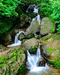 Silky Smooth (Click Geek) Tags: nikon d5200 kitlens 1855 waterfall clickgeek silky slowshutter outdoors green traveler pune incrediblenature