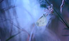 psycolor (Hexilene) Tags: color couleur proxy plante passion proxi papillon nikon nikonpassion nature nikond750 sigma