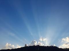 Shafts of sunlight (janetfrerichs) Tags: sunset shafts sunshine summer germany bluesky samsung galaxys7 smartphone sonnenstrahlen forest wald blackforest schwarzwald sonnenuntergang sonnenschein shootcamp achtsamkeitsbung