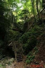 IMG_8923 (Pfluegl) Tags: niedersterreich sterreich austria lower wandern hikking hiking wanderlust natur nature autumn summer rock steine geology geologie steinwandklamm klamm gorge canyon