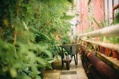 ( Nino) Tags: ai nikkor 50mm f12 s film 35mm 35 mm analog manual dof bokeh depth field 50 f12s canon nikon green botanical garden gardens
