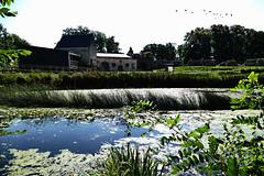 Waterburcht Pietersheim Lanaken (B) (jo.misere) Tags: pietersheim lanaken belgie waterburcht natuur lagen layers tegenlicht backlight nature
