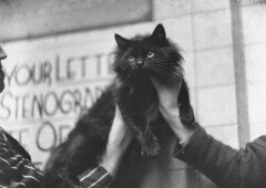 Persian cat,  14 September 1934, Sam Hood (State Library of New South Wales collection) Tags: statelibraryofnewsouthwales