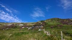 A Field in Connemara. (mcginley2012) Tags: connemara field rocks fence sky blue green purple heather cloud landscape lumia1020 cameraphone ireland cogalway countryside purpleheather vibrant drystonewall