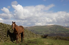 Recalcitrant horse above Whaley Bridge (dobraszczyk) Tags: peak district national park