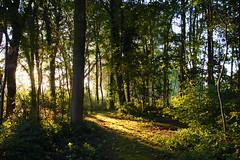 Zonsopkomst in het bos 25-9-2016 (Walter van Ooijen) Tags: a65 bommelerwaard brakel bos dutch day europa flickrsbest forrest gelderland holland landscape landschap nature natuur netherlands nederland nederlandvandaag ochtend outdoor park sony sigma sigma18250mm sun sunrise september tree zon zonsopkomst
