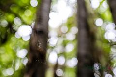 MCG_1054 (mikegreen78) Tags: britain british countryside forest leaf leaves stodmarsh woodland woods spider web littlebourne england unitedkingdom gb