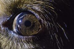 Luke Eye (agnese_mari) Tags: nikon d7100 eye eyes black particular hole blackhole lines dog photo macro macrophotography