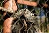 IMG_7534 (kuku4pandas) Tags: atlanta zoo zooatlanta asianbearcat biturong