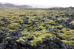Moss-covered volcanic rock - Iceland (Pat L.314) Tags: iceland moss lichen volcanicrock coth reykjanespeninsula absolutelystunningscapes tamron18270 coth5 blinkagain