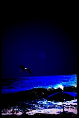 luna seaの壁紙プレビュー