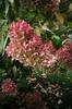 (fleurhouse) Tags: montreal prettypetals graveyardflowers