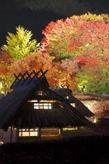 Autumn Festival (peaceful-jp-scenery) Tags: lighting autumn maple sony   tamron amount   lakekawaguchi   a001  fuji5lakes dslra900 900 spaf70200mmf28di  momijikairou