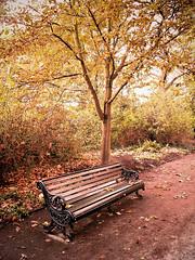 Autumn Collection 0067