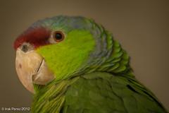 El_Nido-4.jpg (Irak Prez) Tags: nov birds animals mexico birding aves captive 2012 elnido nov12 edomex ixtapaluca