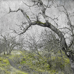 The Enchanted Forest series (Nick Kenrick.( away in Europe )) Tags: trees forest woods path tolkien enchanted tatot redmatrix