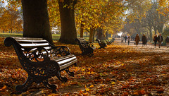 London - Autumn