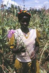 Maize-woman