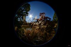 Rikugi-en (Matthias Harbers) Tags: park wood tree ex japan photoshop garden japanese tokyo dc nikon place sigma fisheye hut labs dxo resting f28 45mm edo circular topaz tokio rikugien yabbadabbadoo hsm rikugiengarden bunkyōku flickraward d7000 45mmf28exdchsmcircularfisheye
