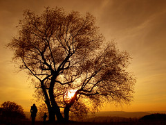 Mother and Son under a Willow Tree watching Sunset (Batikart) Tags: park autumn boy sunset people orange woman black mountains color tree tower art fall nature leaves silhouette yellow backlight forest canon germany season landscape geotagged outdoors deutschland golden leaf vineyard tv weide flora europa europe child stuttgart pov hill herbst natur silhouettes romance foliage growth willow trunk layers recreation r