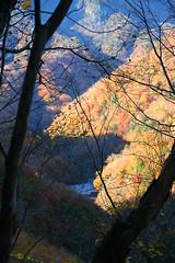 IMG_9939 (youkaine) Tags: november autumn red orange mountain yellow japan forest river waterfall hiking autumncolors foliage 日本 紅葉 秋 山 yamanashi 11月 川 ハイキング 山梨 nishizawakeikoku 葉っぱ 山梨県