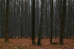 November woods (Gregor  Samsa) Tags: november autumn fall highlands czech czechrepublic bohemia moravia vysoina cesko esko eskrepublika vysocina vrchovina ceskomoravska czechmoravian eskomoravskvrchovina ceskomoravskavrchovina czechmoravianhighlands