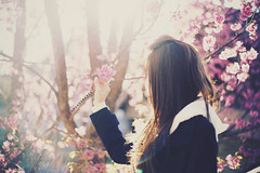 Cherry Blossoms (Amanda Mabel) Tags: china morning pink flowers winter light portrait sun sunlight holiday tree beautiful vintage hair cherry hoodie asia purple bokeh sister branches blossoms wintercoat lensflare faceless sakura cherryblossoms yunnan dali admiration traveldiary tianlongbabu amandamabel amandamabelphotography