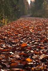 brown leaves (Ecki89) Tags: autumn sun leave nature leaves herbst natur cement sunny blatt sonnig bltter beton
