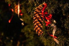 Festive Splendour (Jamarem) Tags: christmas trees winter decorations festive cone derbyshire fir nationaltrust 18200mm calkeabbey canon50d