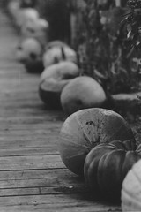 Pumpkins (hermes303) Tags: blackandwhite france film mans le hp5 analogue canona1 ilford lemans fd 400iso sarthe archedelanature ilfordrapidfixer14 homemadedevelopment perceptol13 fd135mmf25sc