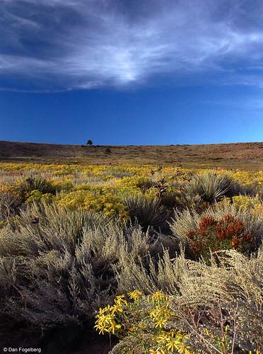 Photo - Cobalt Trail