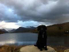 IMG_2038 (Arfon Davis) Tags: dog pet snow water wales cymru snowdon llanberis snowdonia gwynedd wyddfa eryri llyn northwales llynpadarn brynrefail