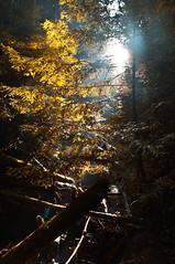 forest of nisene marks (Dave_B_) Tags: california park ca usa santacruz green nature water forest unitedstates hiking bayarea aptos nisenemarks