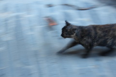 Prisa - Hurry (mario llarg) Tags: naturaleza nature cat chat natura gato hurry gat pressa prisa hte